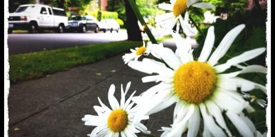 daisys in seattle